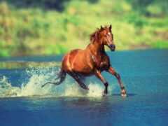 лошадь, рюкзак, катание