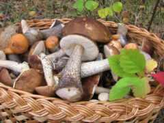 mushroom, wild, socialna