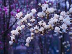 primavera, йога, весна