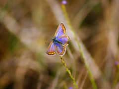nokia, бабочка, изображение
