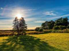 природа, финляндия, трава