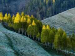 природа, дерево, landscape