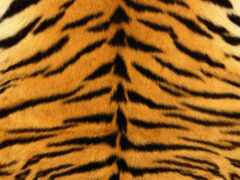 тигр, skin, полоса