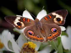 бабочки, насекомые, бабочка