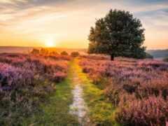 свет, утро, heather