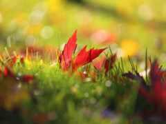 осень, трава, природа