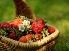 ягоды, фрукты, корзине