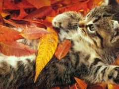 osen, кошка, листья