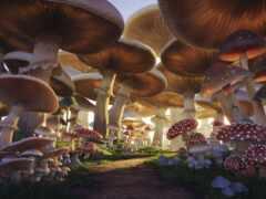 mushroom, fore, fantasy