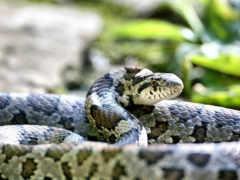 freepik, snake