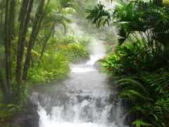 jungle, яndex, costa