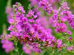 цветы, high, definition