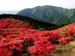 красные, цветы, горы