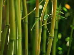бамбук, зелёный, широкоформатные