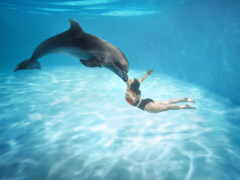 pattaya, дельфинарий, klake