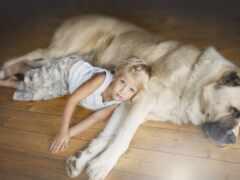 собака, порода, ребенок