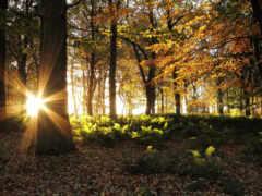 les, солнце, деревя