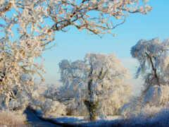 дерево, winter, oir