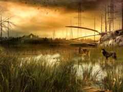 аномалия, stalker, marsh
