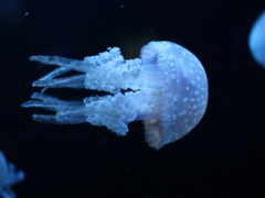 jellyfish, ультрафиолет, underwater