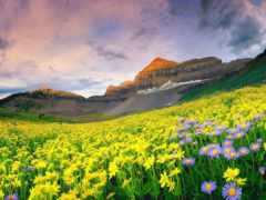 долины, цветочные, поле
