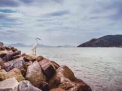 цапля, море, птица