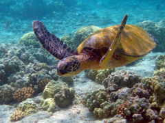 turtle, sea Фон № 6341 разрешение 1280x1024