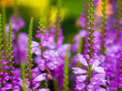 cvety, полевые, названия