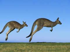 австралии, австралия, kangaroo