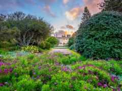 garden, botanical, sydney