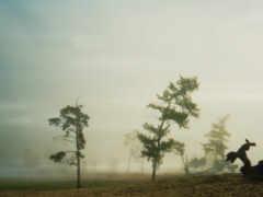 vintage, дерево