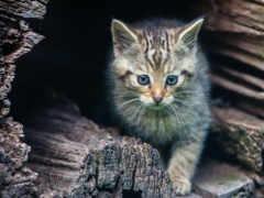 peep, ebay, котенок