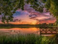 закат, озеро, дерево