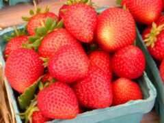 adronix, клубника, плод