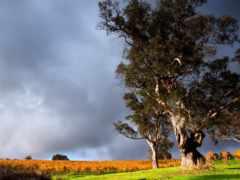 тучи, трава, trees