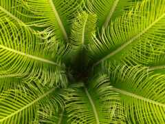 palm, leaf