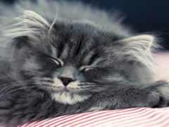 кот, модуль, котенок