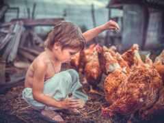 ребенок, курица, stoloboi