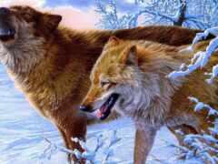 волк, фамилия, origin