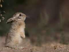 rear, foot, bunny