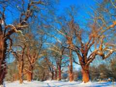 winter, природа, фон