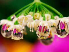 макро, капли, цветы