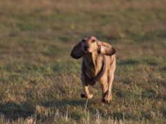 собака, running, iphone