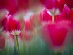 цветы, lovely, яркий