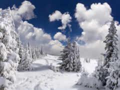 снег, стена, тихий