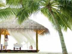 пляж, palm