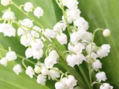 весна, цветы, доставка