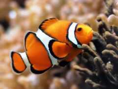 клоун, fish, dumb