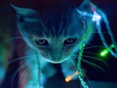 кот, котенок, средний