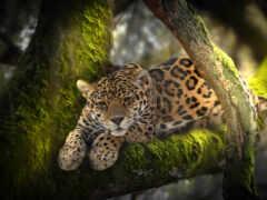 леопард, животные